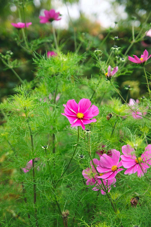 jardin-botanique-glasgow3