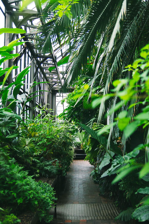 jardin-botanique-glasgow4