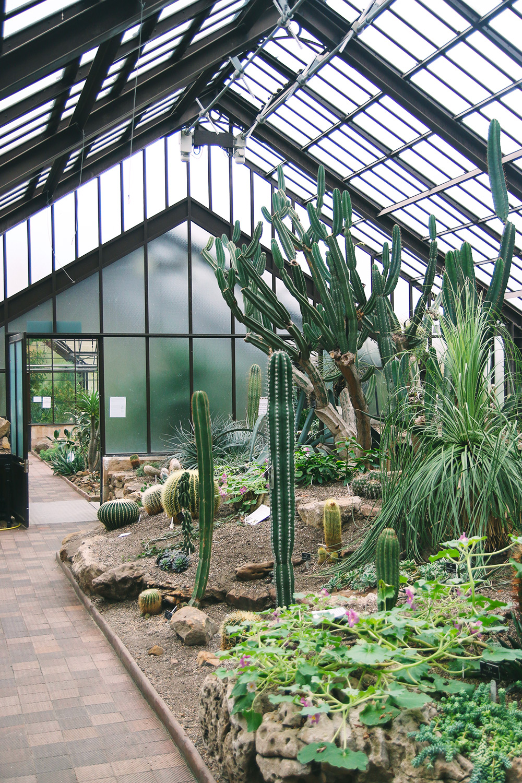 jardin-botanique-glasgow5