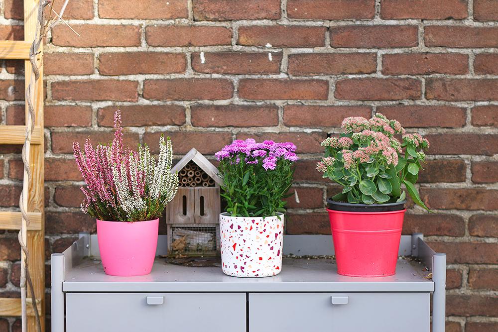 plantes-fleurs-automne-balcon