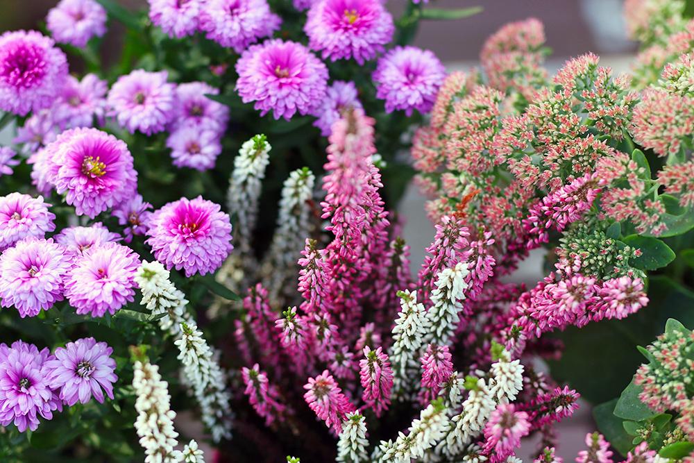 plantes-fleurs-automne-balcon2
