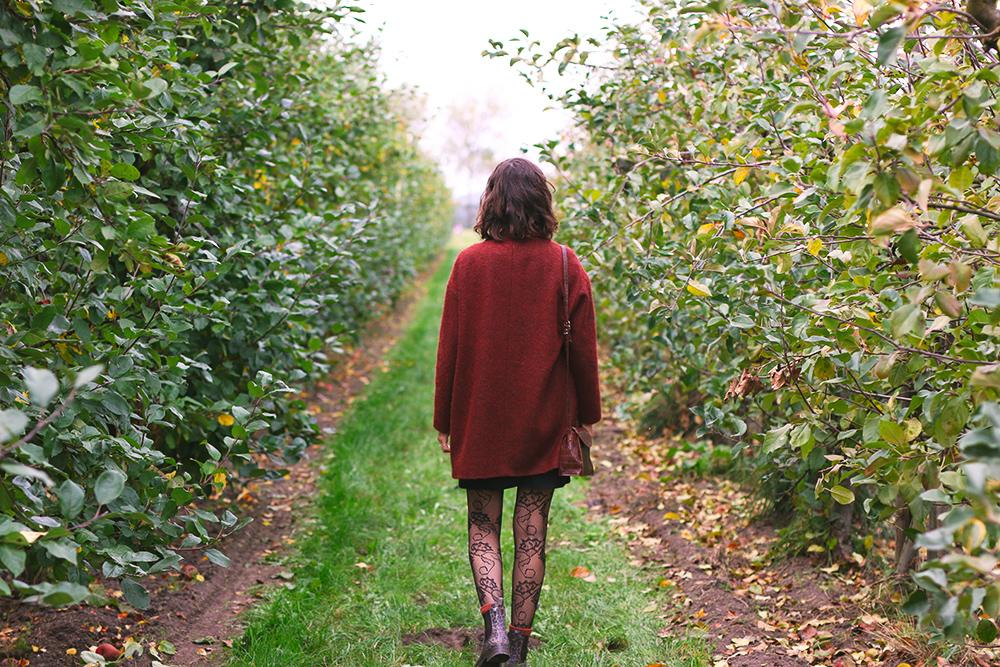 recoltes-automne-cueillette-pommes-amsterdam