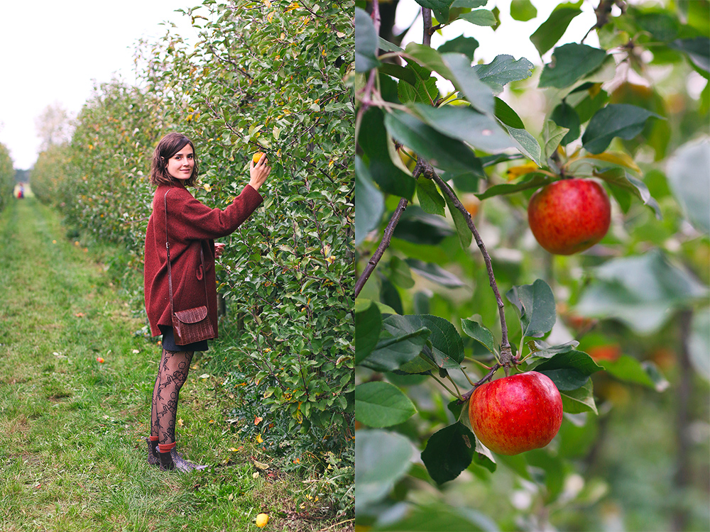 recoltes-automne-cueillette-pommes-amsterdam2