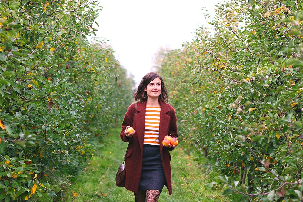 recoltes-automne-cueillette-pommes-amsterdam7