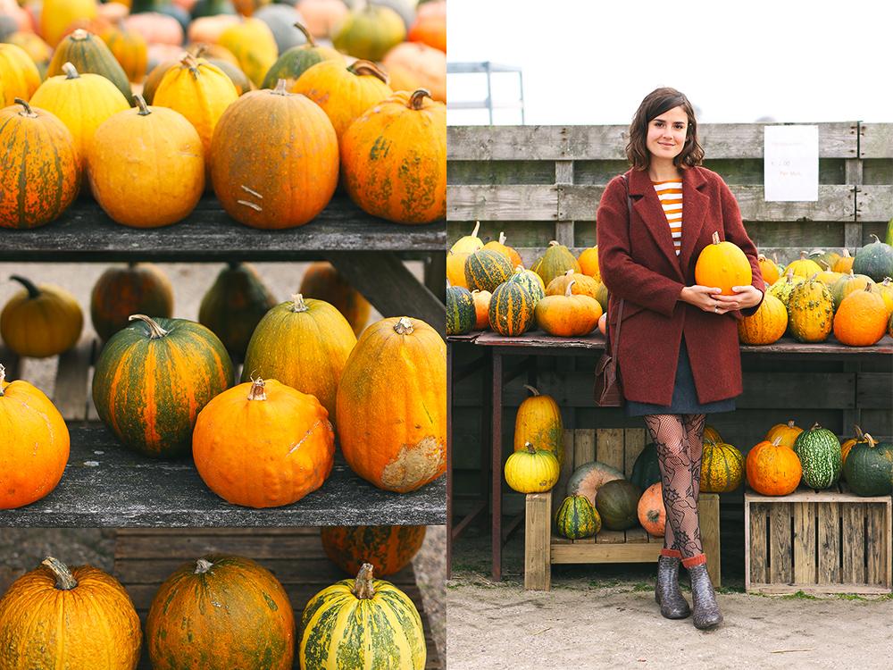 recoltes-automne-ferme-citrouilles-amsterdam