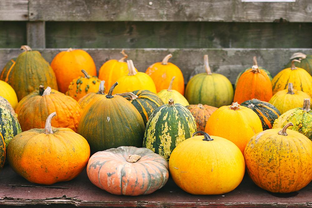recoltes-automne-ferme-citrouilles-amsterdam2