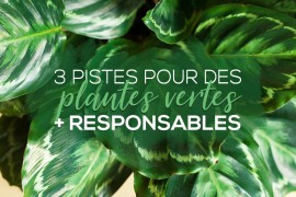 idees-consommation-responsable-plantes-vertes