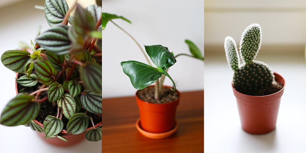 favoris-janvier-plantes1