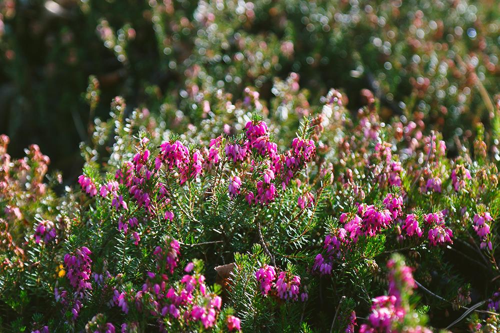 dublin-jardinbotanique11