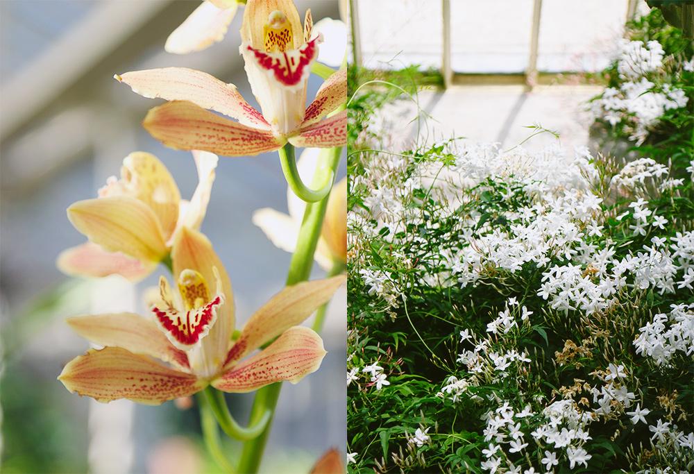dublin-jardinbotanique3