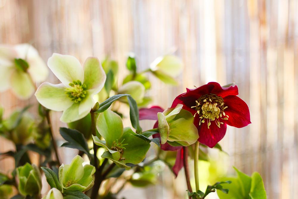 favoris-fevrier-plantes1