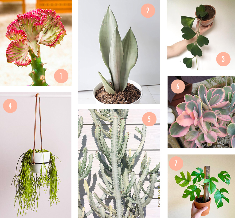 wishlist-plantes-interieur-debut2019