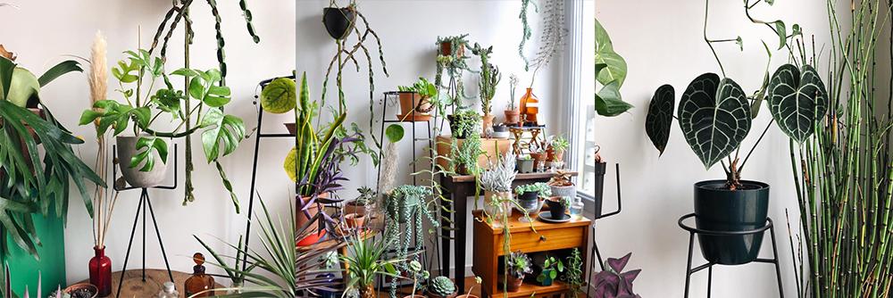 IG-plantesaddicts-anton_peaks