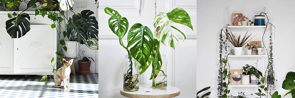 IG-plantesaddicts-botanicalsandbillie