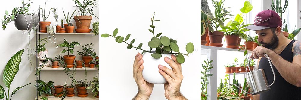 IG-plantesaddicts-jrlefrancois
