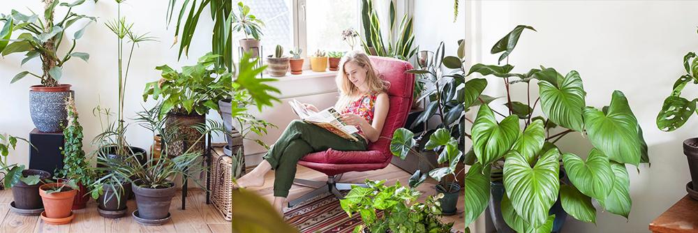 IG-plantesaddicts-mamabotanica.amsterdam