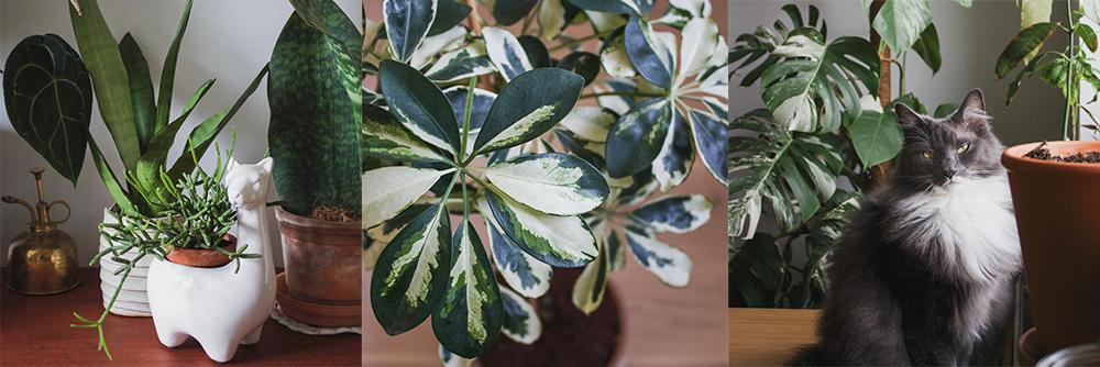 IG-plantesaddicts-nicoplants