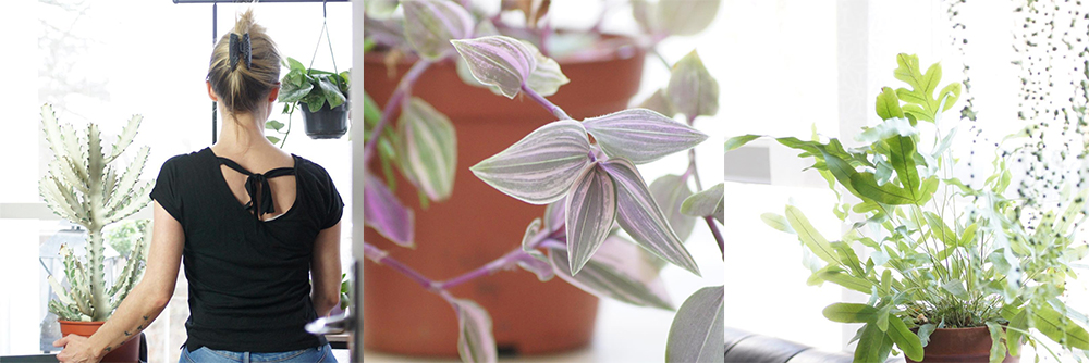 IG-plantesaddicts-unefleurparmilesfleurs