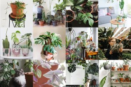 comptes-instagram-plantes-lovers