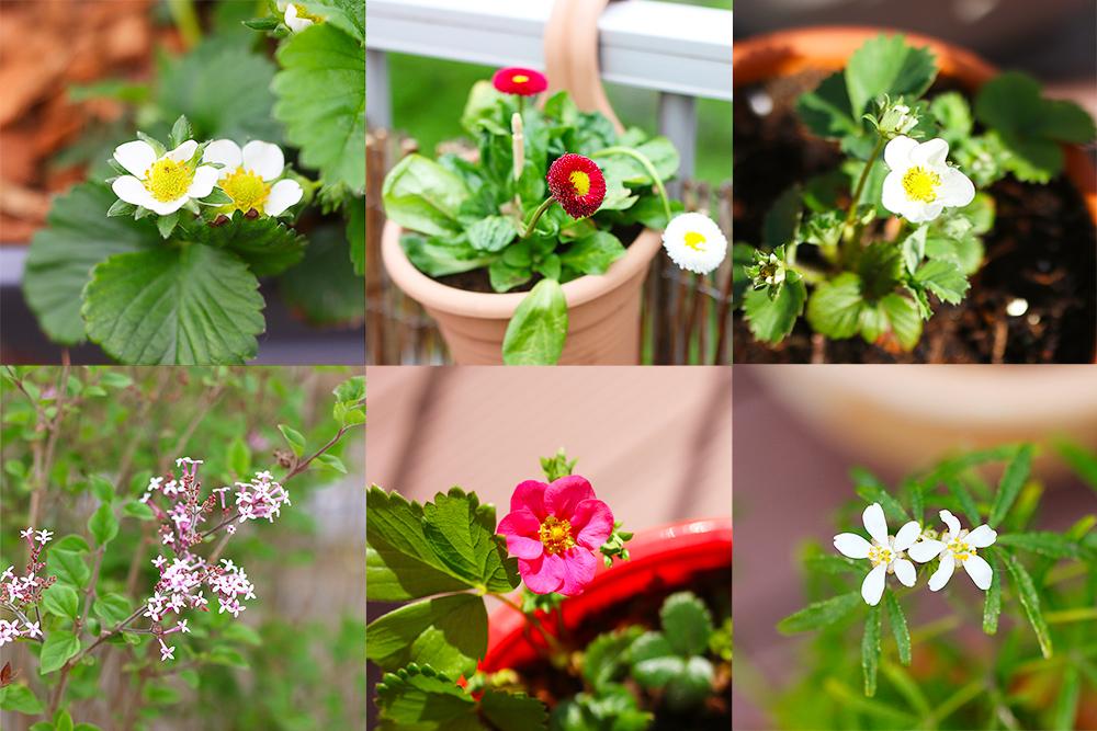 favoris-avril-jardinage