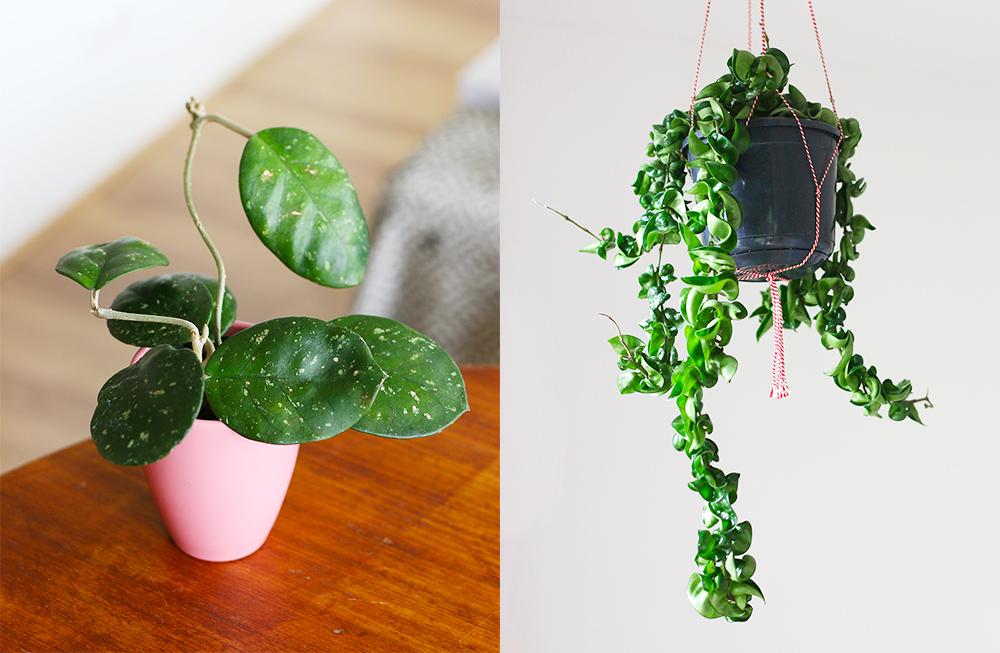 favoris-avril-jardinage3
