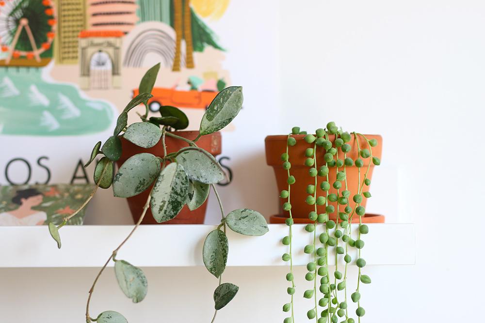 planttour-printemps2019-1