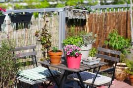 visite-terrasse-rooftop-plantes-exterieur