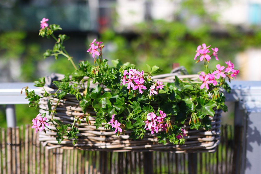 visite-terrasse-rooftop-plantes-exterieur3