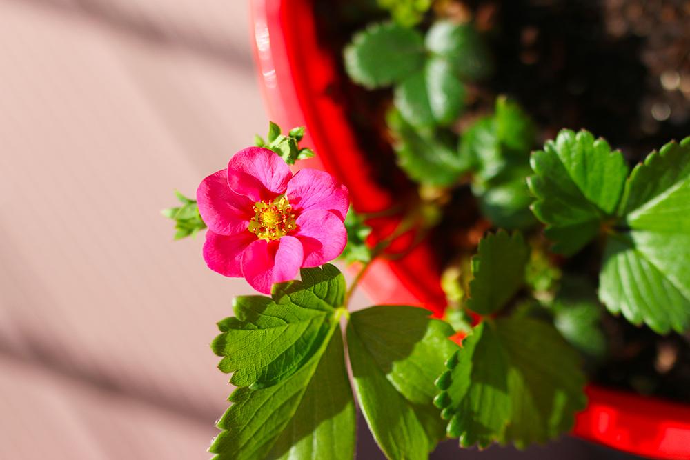 visite-terrasse-rooftop-plantes-exterieur4