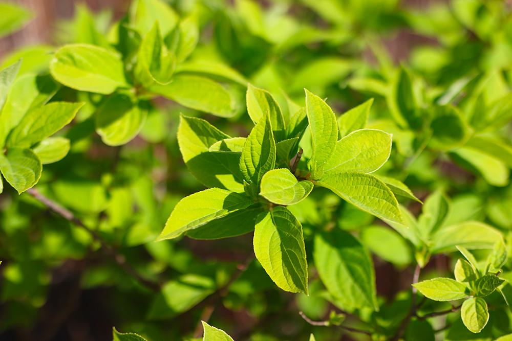 visite-terrasse-rooftop-plantes-exterieur5