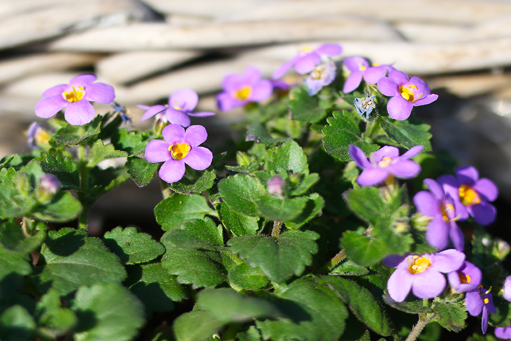 visite-terrasse-rooftop-plantes-exterieur6
