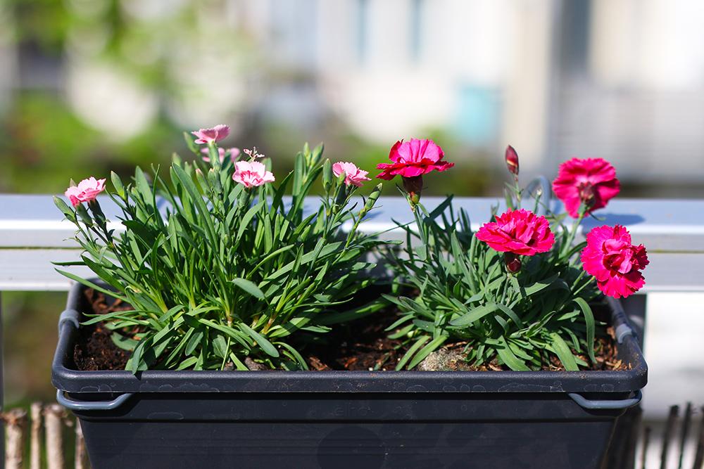 visite-terrasse-rooftop-plantes-exterieur7