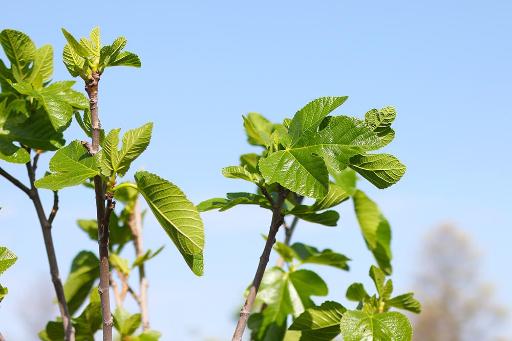 visite-terrasse-rooftop-plantes-exterieur8