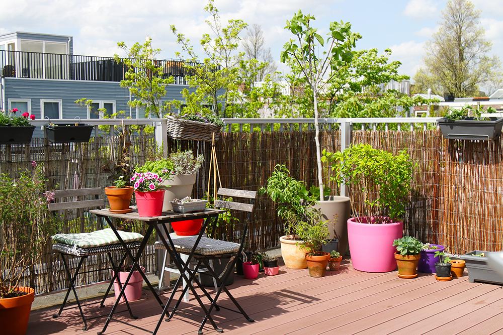 visite-terrasse-rooftop-plantes-exterieur9
