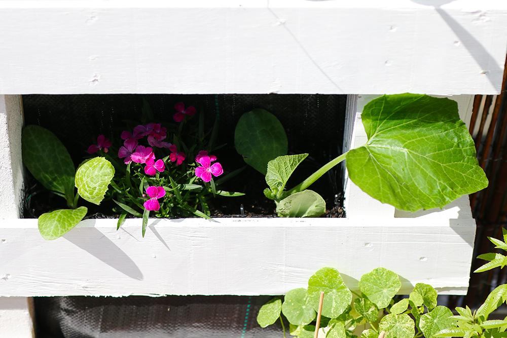 DIY-potager-palette-conseils7