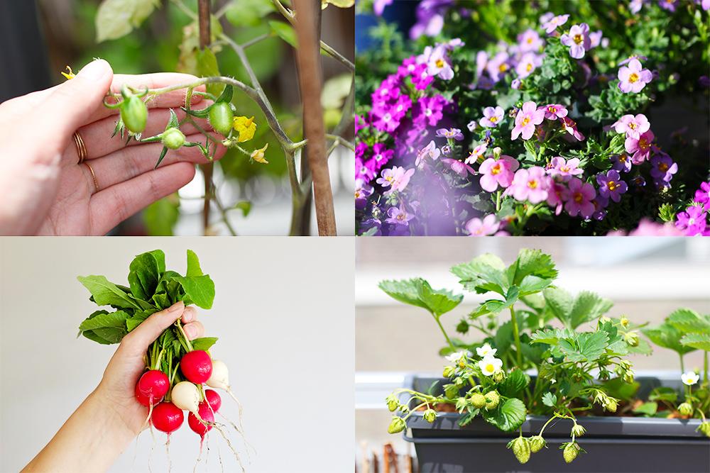 favoris-jardinage-mai2019