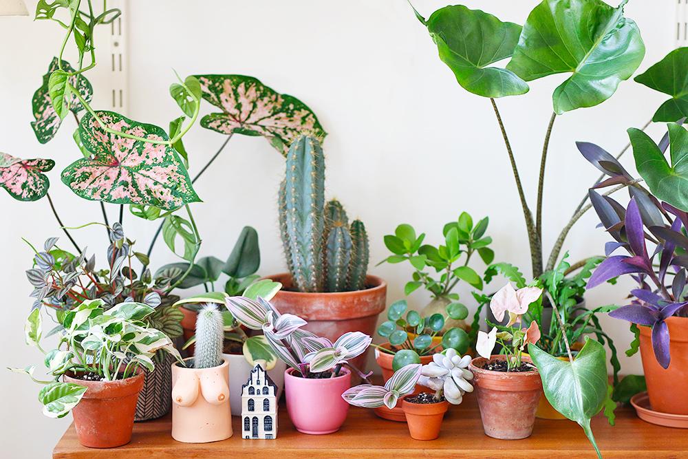 boutiques-en-ligne-plantes-rares