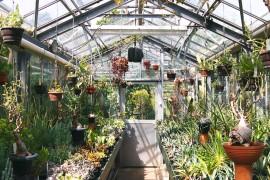 jardin-botanique-universitaire-zuidas-amsterdam