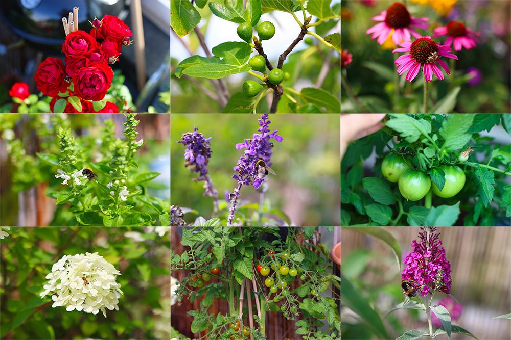 favoris-jardinage-juillet2019