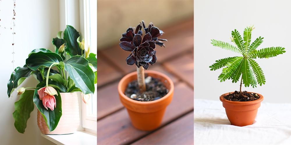 favoris-plantes-juillet2019