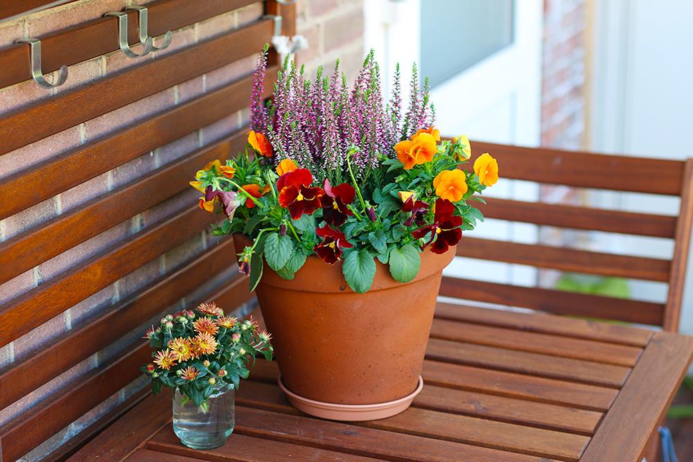 jardiniere-automne-bruyere-pensees
