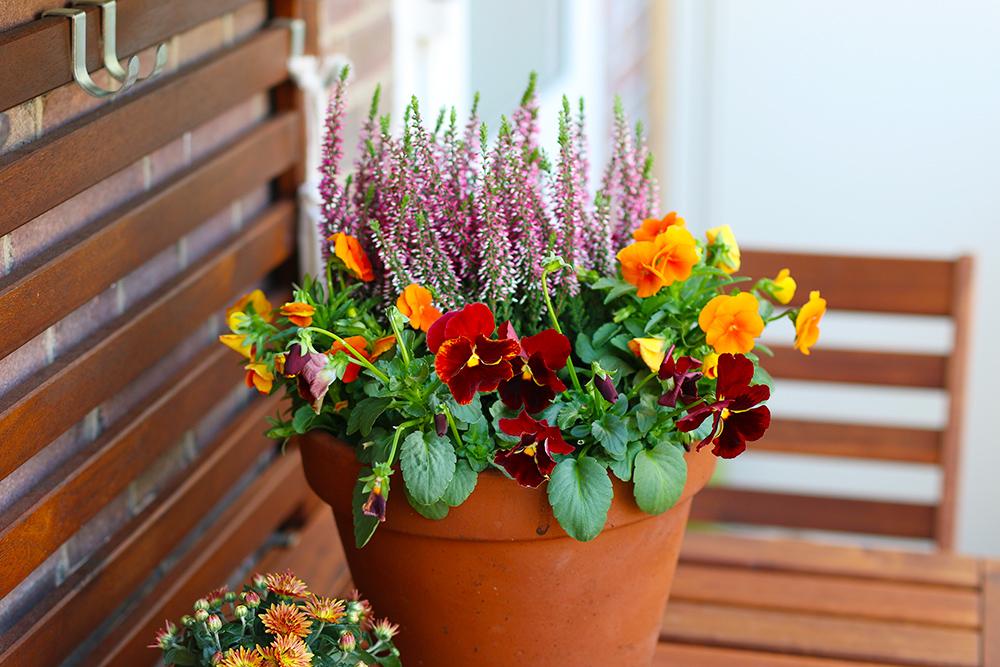 jardiniere-automne-bruyere-pensees3