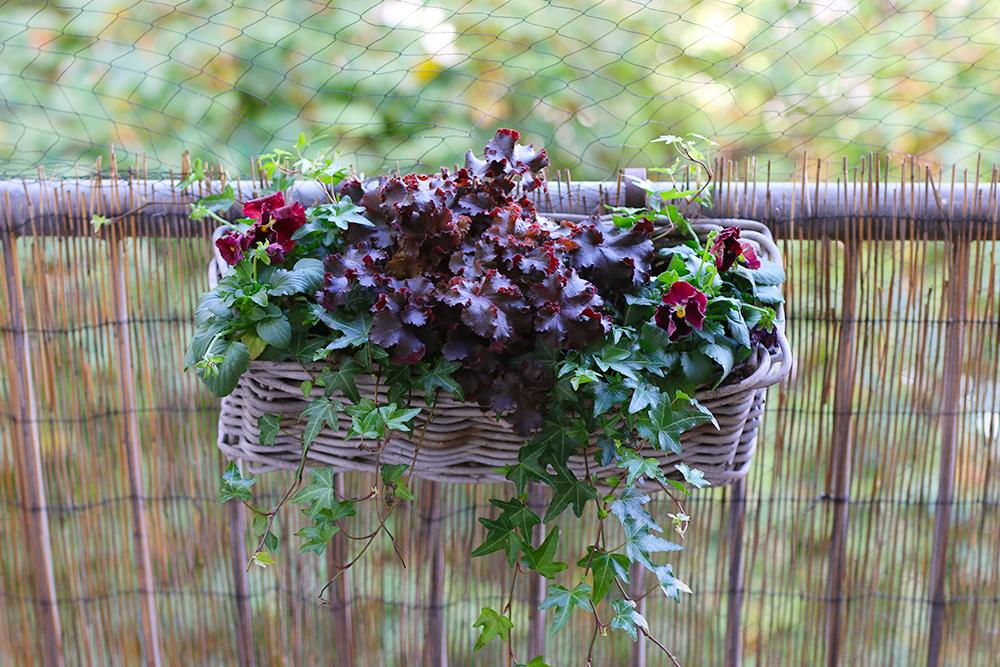 jardiniere-automne-pourpre