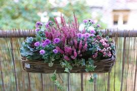 jardiniere-automne-version-rose-violette