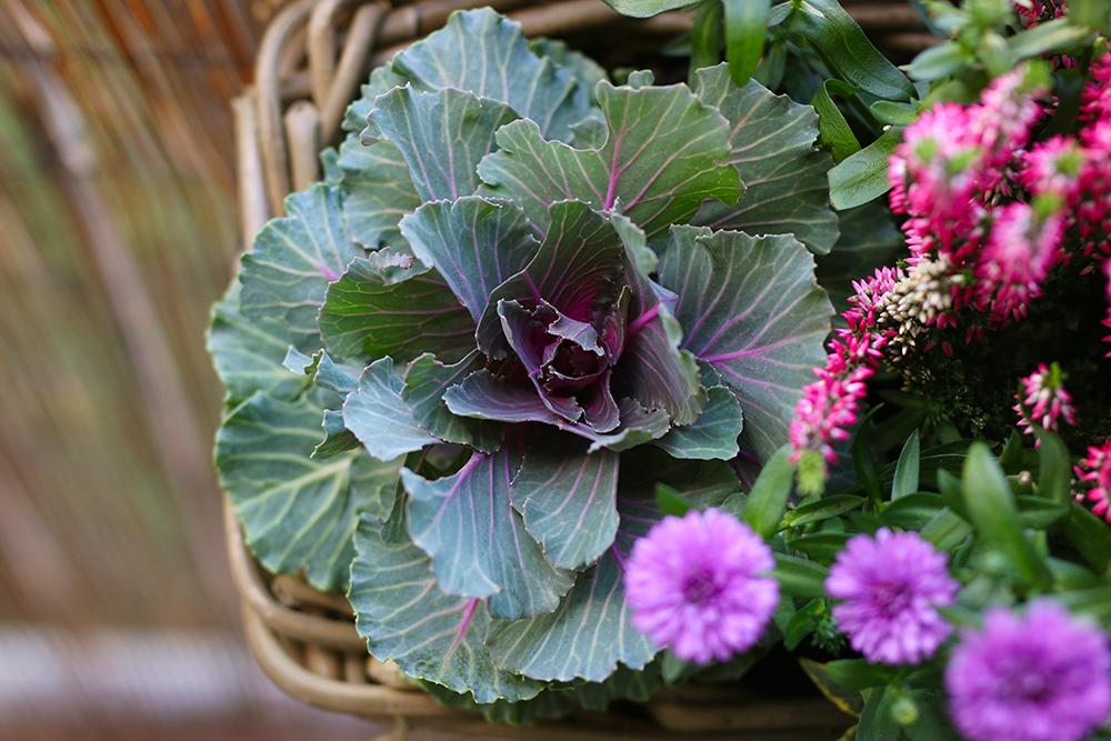jardiniere-automne-version-rose-violette2