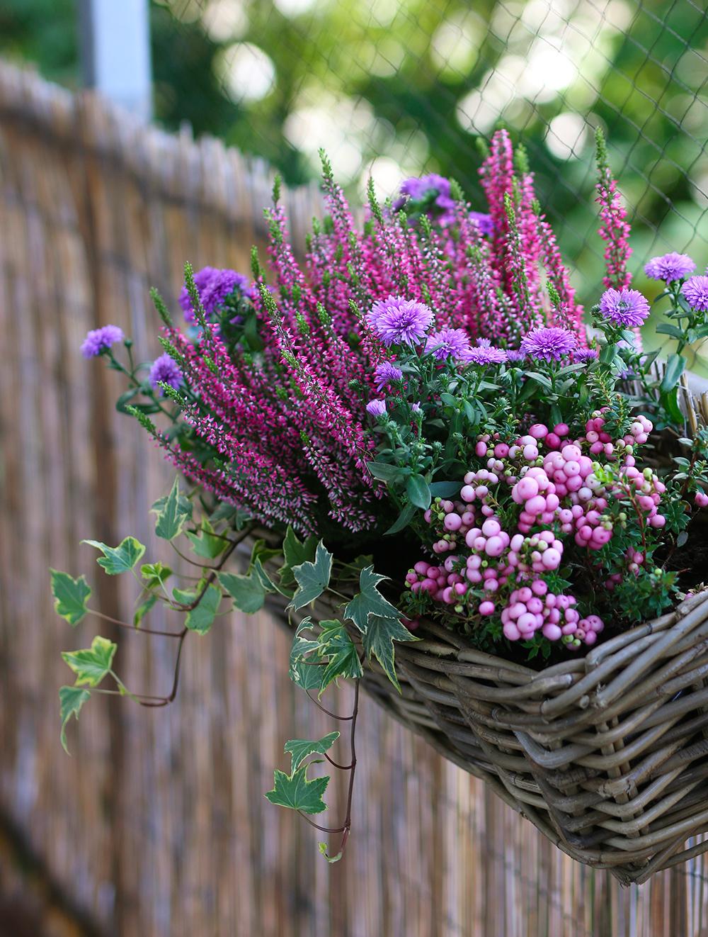 jardiniere-automne-version-rose-violette4