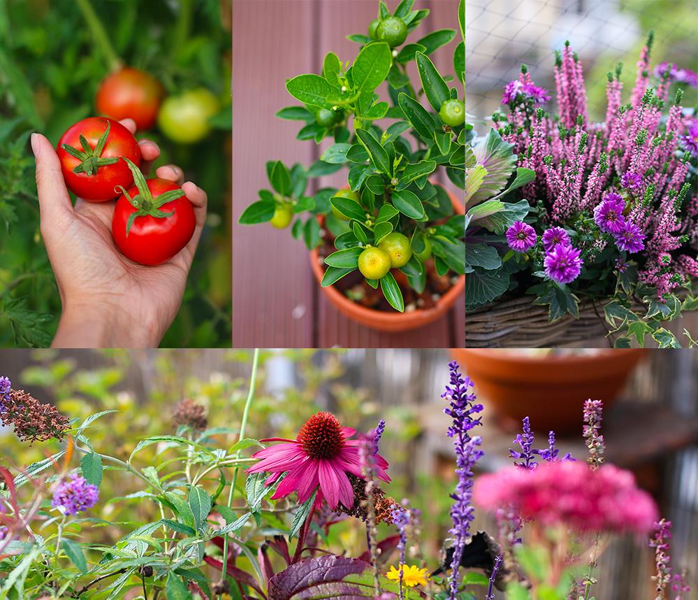 favoris-septembre2019-jardinage