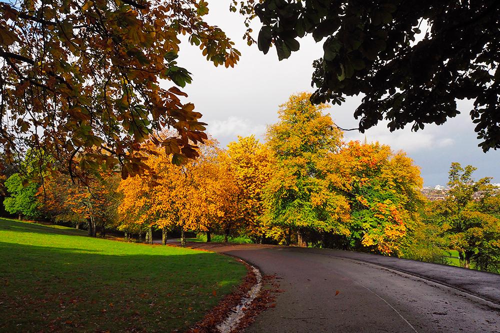 plaisirs-automne-foret