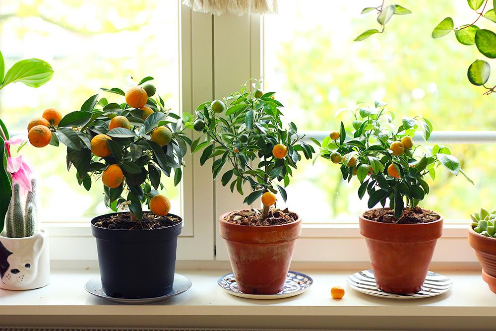 favoris-octobre2019-plantes