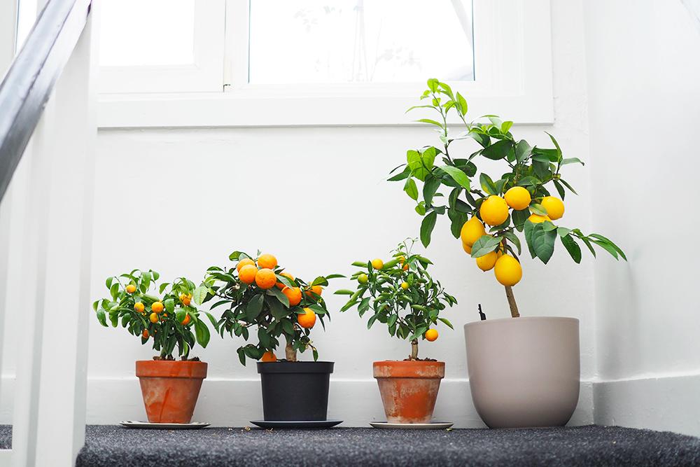 favoris-plantes-novembre2019